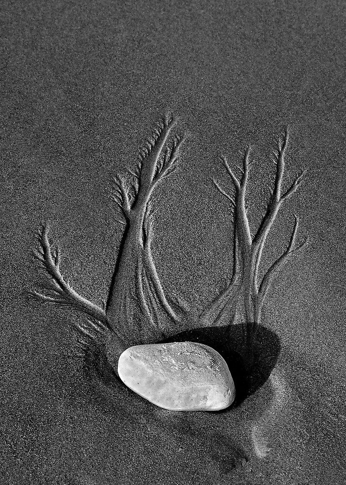 Bonsai in the Sand by Mariann Kovats