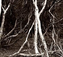 Blair Witch Revisted by Jodi Turner