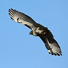 Red Tailed Hawk Majestic by lloydsjourney