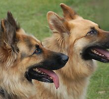 Two dogs by clgoldfine