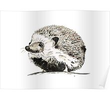 Hedgehog watercolour and ink Poster