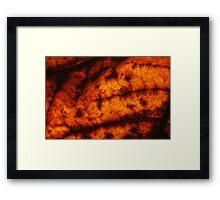 Autumn Leaf #4 Framed Print