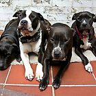 Reef, Chopper, Nibbler and Mags by dolbullbreeds