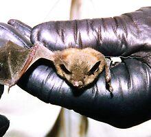Pennsylvania Brown Bat by clizzio