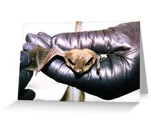 Pennsylvania Brown Bat Greeting Card
