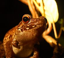 Night Frog by Andy  Christopherson