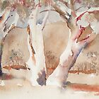 Gum trees by A A Sussman