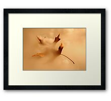 Fall from grace Framed Print