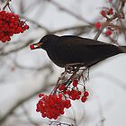 Eating blackbird by Meeli Sonn