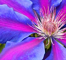 Clematis, Anna Louise. by BizziLizzy