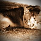 My Neighbour's Cat (2) by smile4me