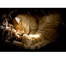 Power nap Photographic Print