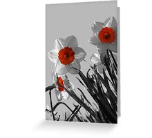 Curious Daffodils Greeting Card