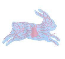 Rabbit  by HannahGordon