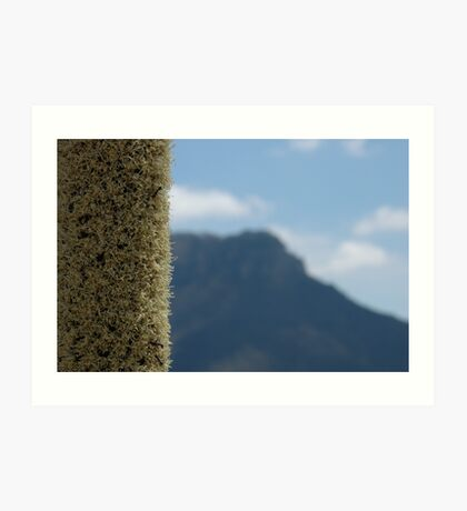 Xanthorrhoea with mountain Art Print