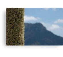 Xanthorrhoea with mountain Canvas Print