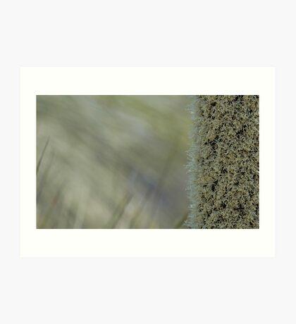 Xanthorrhoea shallow focus Art Print