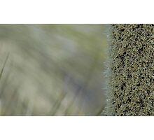 Xanthorrhoea shallow focus Photographic Print