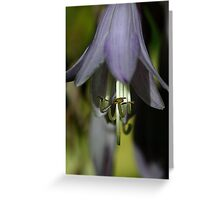 Hosta Flower Greeting Card
