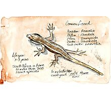 Lizards - Not so easy! Photographic Print