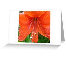 Droppy Floral Orange  Greeting Card