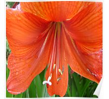 Droppy Floral Orange  Poster