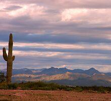 Sunrise Arizona  by Judy Grant