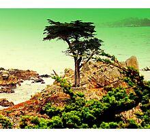 CARMEL CALIFORNIAS ....LONE CYPRESS TREE Photographic Print