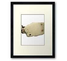 Squished Cat Meme! Framed Print