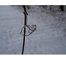 Ice jewell  Photographic Print