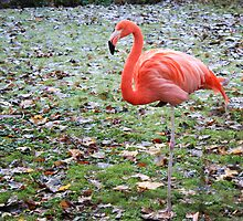 Pink Flamingo by Jonathon Wilson