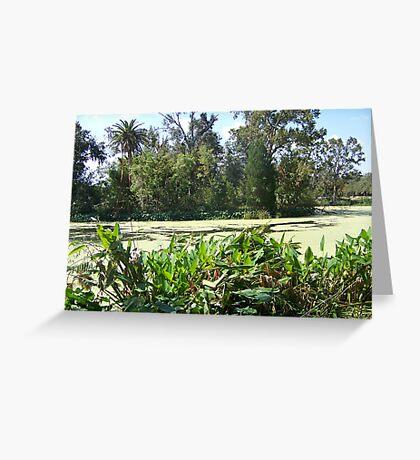 Audobon Park Swamp Greeting Card