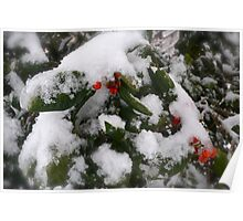 Snow Cover Holly Poster
