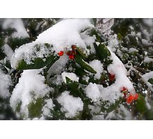 Snow Cover Holly Photographic Print