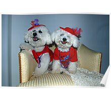 Bichon Red Hatters  Poster