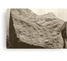 Fossilized Canvas Print