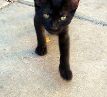Feral Kitten by down23