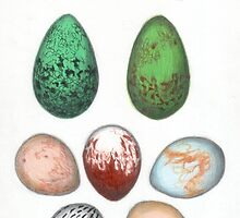 19th century egg collection by CreatureStudies