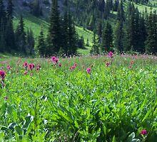 Meadow Wildflowers by KGMiller