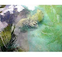 Maria the Turtle Photographic Print
