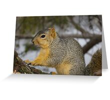 More Seeds Please! Greeting Card