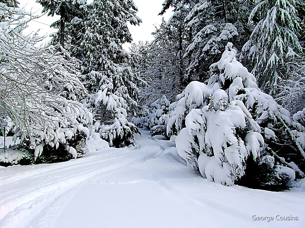 Tracks in my Driveway by George Cousins