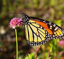"Monarch Delight by Lenora ""Slinky"" Regan"