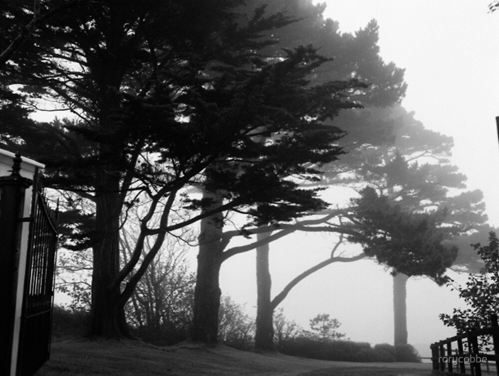 Trees In A Veil by rorycobbe