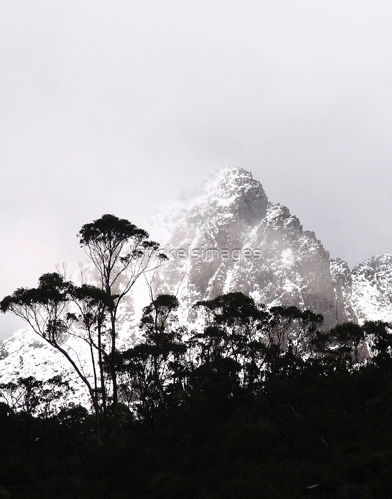 through the trees come mountains by stickelsimages