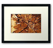 Putrefied Wood Framed Print