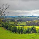 Southern Highlands of NSW Australia by George Petrovsky