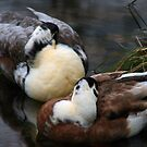 Napping Ducks by Michelle Lane