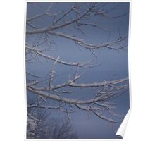 Winter Sky with Branches Poster