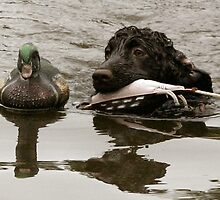 IWS pup and decoy by Pamela Kadlec